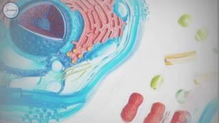 Биология 7 Строение животной клетки