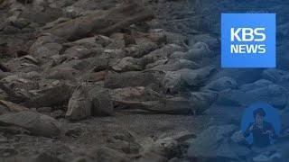 남아공, 최악 가뭄으로 '국가 재난' 선포 / KBS뉴…