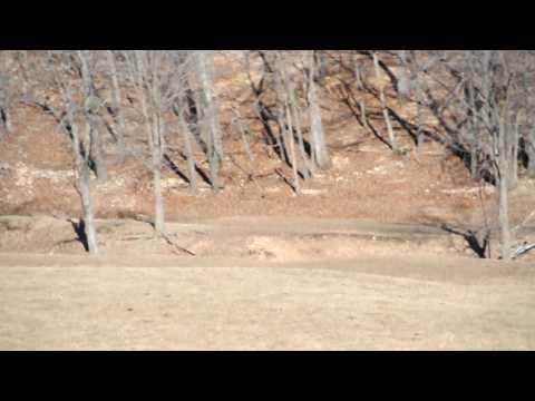 Brenden chasing ram