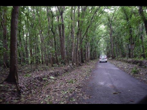 Jalan Akses Baru Wisata Menuju Taman Nasional Alas Purwo ...