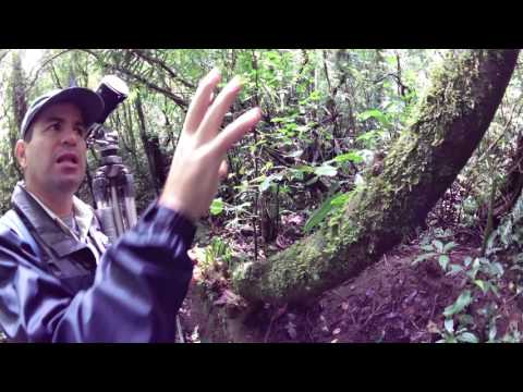 Costa Rica Monteverde Cloud Forest Guided Hike Part 4 Orchids at LeaningTraveler.com