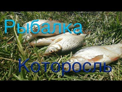 Первая рыбалка с ночёвкой на  р. Которосль.