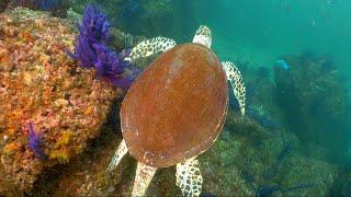 Shark Island, Oman! | JONATHAN BIRD'S BLUE WORLD