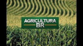 Programa Agricultura BR - 22/11/2017 thumbnail
