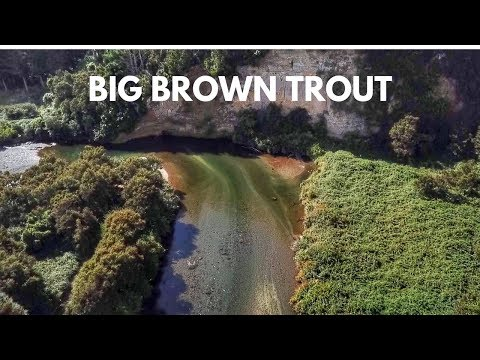Brown trout, Dryflys, lost in a forest!!