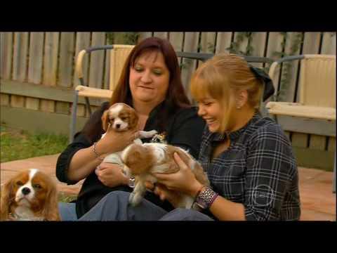 Cavalier Puppies - Totally Wild