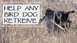 How To Train A Bird Dog That Won't Retrieve  YAWA Dog Training Podcast: Episode 39 Question 4