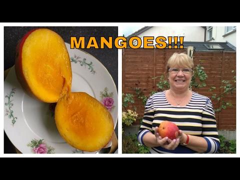 Mango HUNT For Best FRUIT deals - Moore Street, Dublin, Ireland!