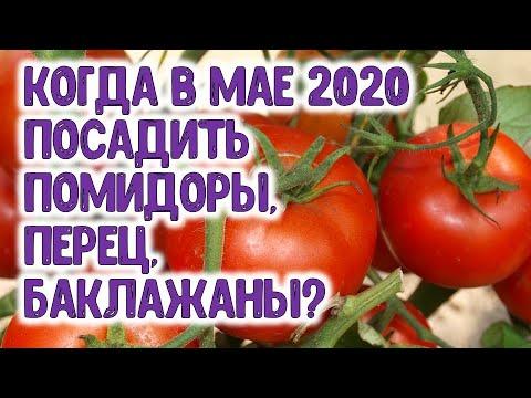 Лучшие дни для посадки томатов, баклажанов и сладкого перца в мае 2020 года Агропрогноз для огородни