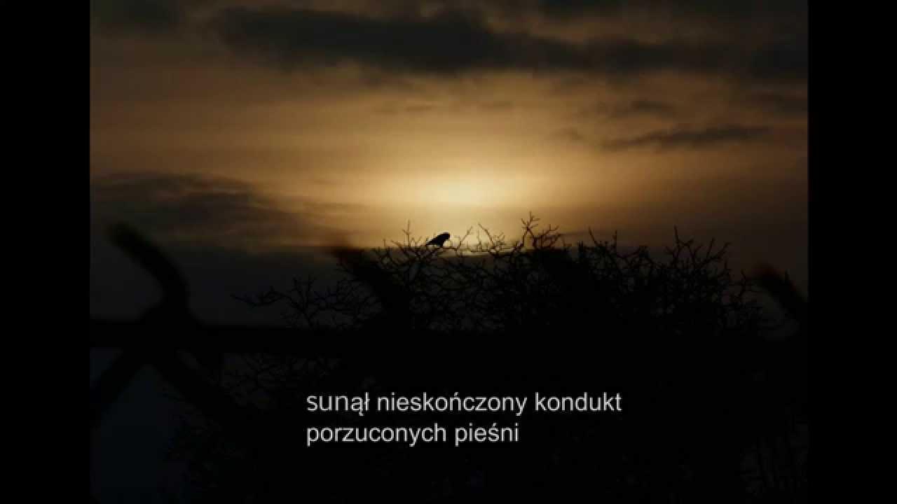 Ptaki Odlatują Birds Are Flying Away Muzyka Poezja Obraz Film