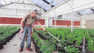 Los Sueños Farms web clip