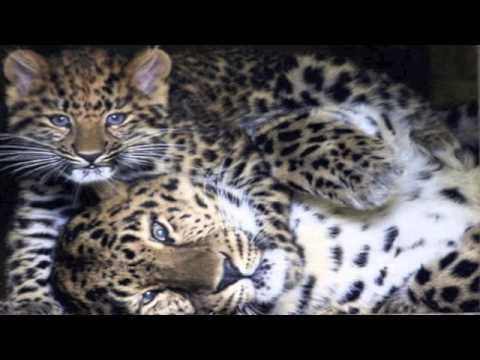 25 Most Endangered Species On Earth