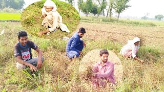 How To Farmer In Chara Beej Catai || Daily procces rautine || With Ali Bhai Official || Naveed Bhai.