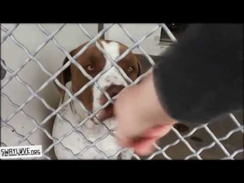 The Carson shelter truth about Pit Bulls and offsite adoption events