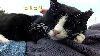 【ワレニャン】寒くなって猫さん大好き人体ホットカーペットの季節になりました