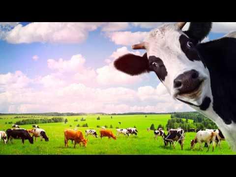 ДОМАШНЕЕ МОЛОКО ПОЛЬЗА И ВРЕД | полезно ли домашнее молоко, полезно ли молоко детям?