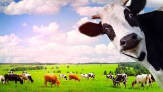 видео Соевое молоко: польза и вред для детей и взрослых
