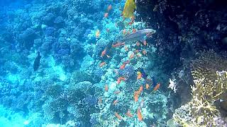 Египет Шарм Эль Шейх коралл возле отеля coral beach Montaza Egypt Saharm el Sheikh