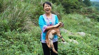 小羊羔可爱到没天理,秋子爱不释手,抱回家当宠物周医生会同意吗