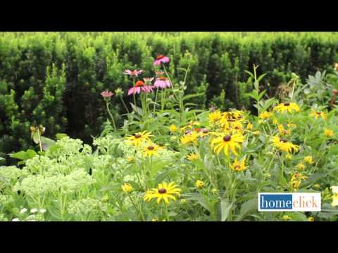 Late Summer Blooming Perennials | The Best Late Summer Perennials<a href='/yt-w/PtmxwPBGVQE/late-summer-blooming-perennials-the-best-late-summer-perennials.html' target='_blank' title='Play' onclick='reloadPage();'>   <span class='button' style='color: #fff'> Watch Video</a></span>