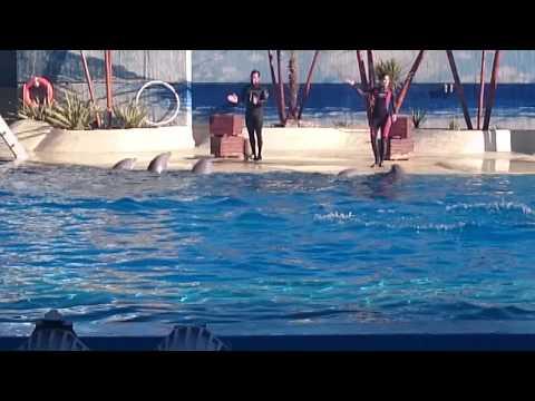 Exhibición de Delfines - Delfinario Zoo Aquarium Madrid