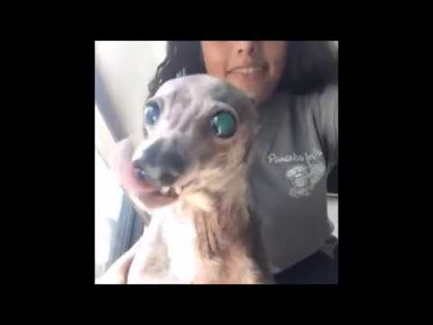 The Cutest Ugly Dog Youtube