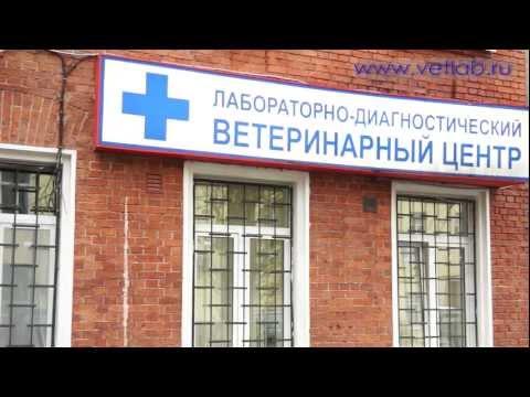 Фильм-презентация Ветеринарная лаборатория Шанс Био