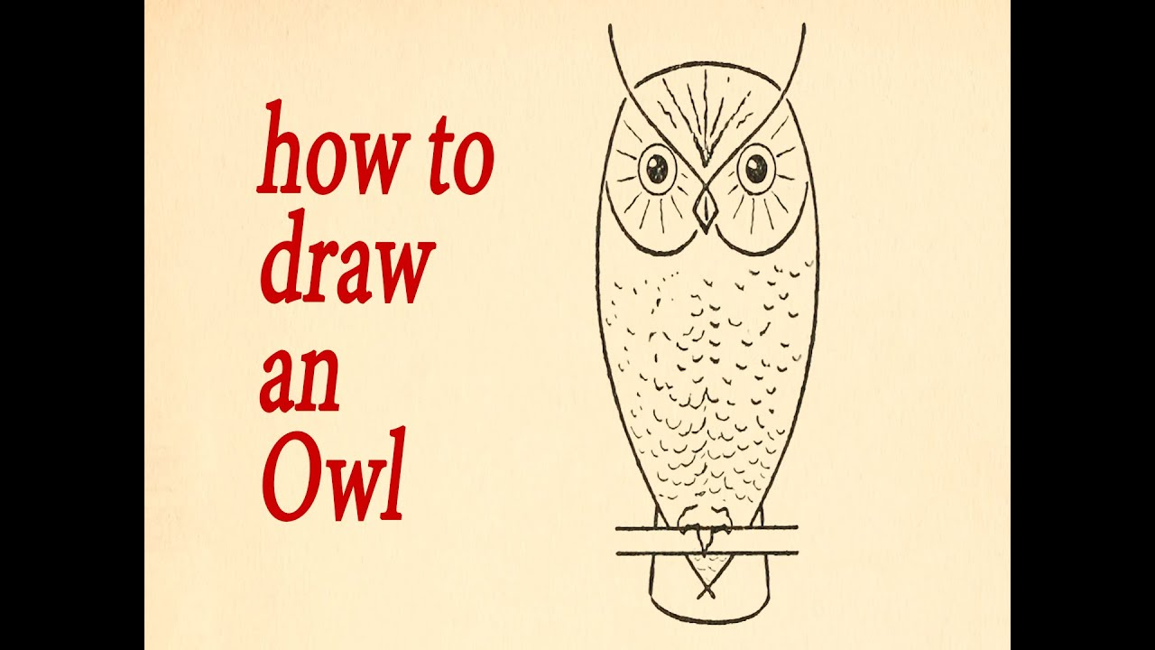 owl what to draw and how to do it an owl youtube