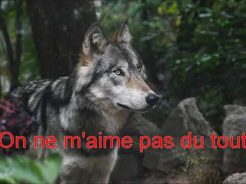 Et si on aimait les loups ?