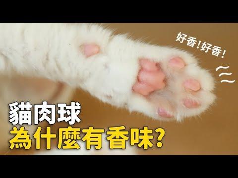 【貓肉球為什麼有香味?】志銘與狸貓