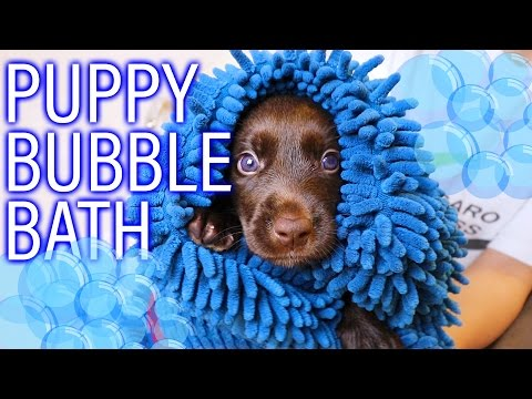 Day 21: Puppy Bubble Bath!! | Orphan Fosters Finally CLEAN!