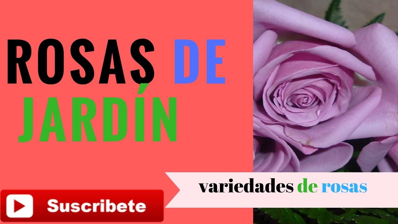 JARDÍN DE ROSA -ESPECIES DE ROSAS -ROSALES JARDÍN CULTIVAR ROSALES EN EL  JARDÍN VARIEDADES DE ROSAS