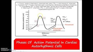 myocardial action potential animation