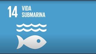 14 Vida Submarina -Agenda 2030-