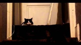 New Cat on the block. Please Subscribe, Comment & Like. Thank you ~...