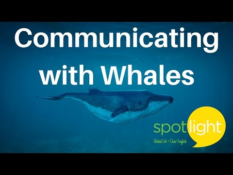 """""""Communicating with Whales"""" - practice English with Spotlight"""