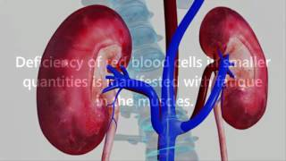 If Your Kidneys Are In Danger, These Are The 5 Signs You Should Not Ignore!