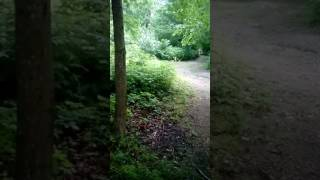 thinking that libby know they was being fellowed on trail from bg guy