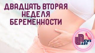22 неделя беременности: что происходит с плодом и животом
