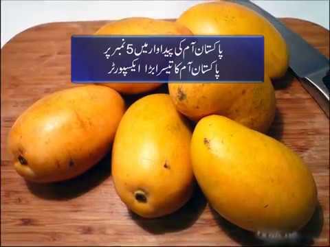 Production of ethanol from mango mangifera