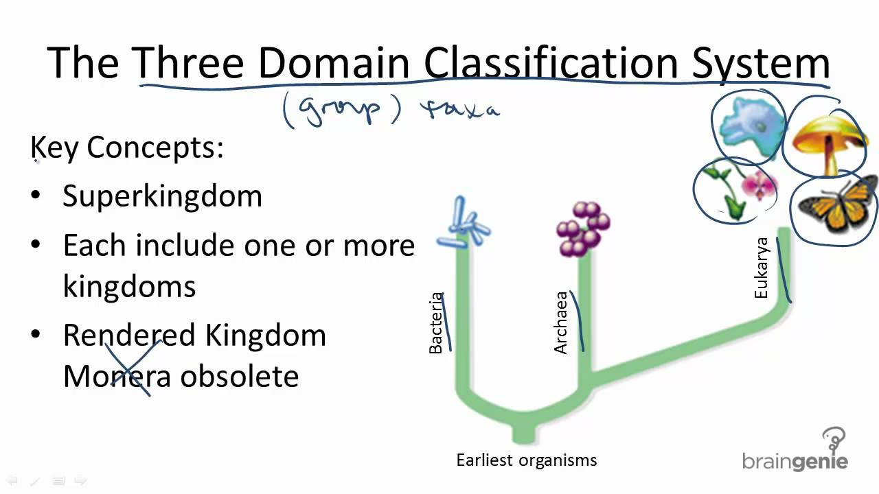 three domain system of classification Classification of living organisms-five kingdom system protista, monera, fungi, plant, animals, - duration: 13:55 learners' planet 190,984 views.