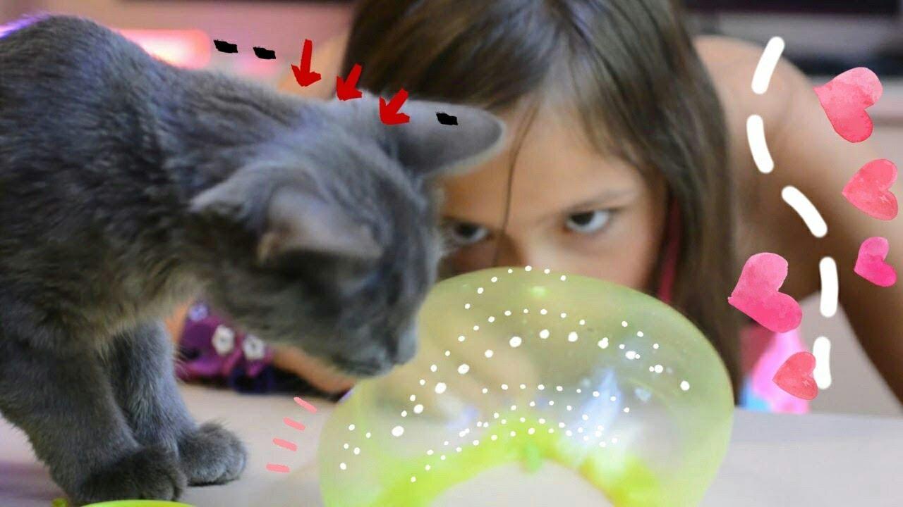 Картинки котик лизун