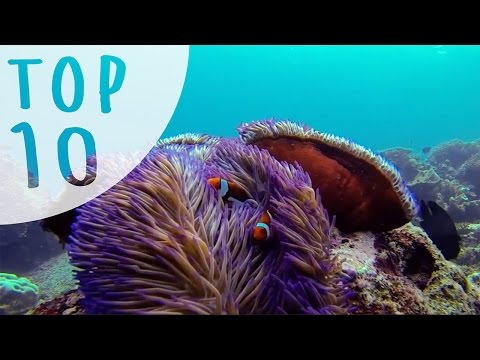 Top 10 Things to do in Cairns and Port Douglas (AUSTRALIA) - www.bookme.com.au