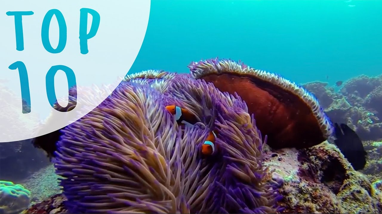 Top 10 Things to do in Cairns and Port Douglas (AUSTRALIA) -  www bookme com au