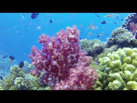 Soft Corals of Fiji