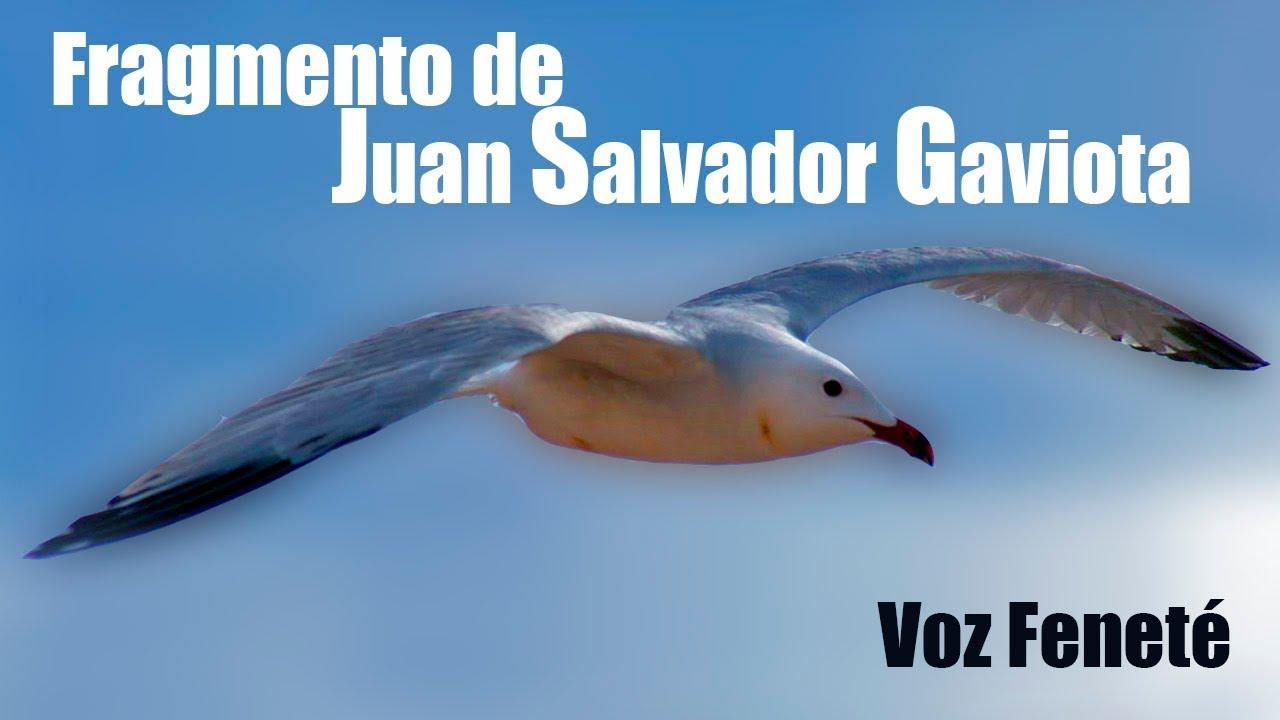 Eres Original O Uno Mas Juan Salvador Gaviota Fragmento Richard Bach By Feneté