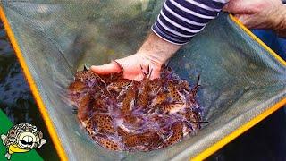 CRAZY Fish Farm Breeder! bioAquatiX