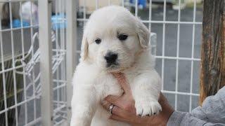 http://passerellewan.jp/puppies/?type=7.