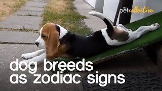 Dog Breeds As Zodiac Signs
