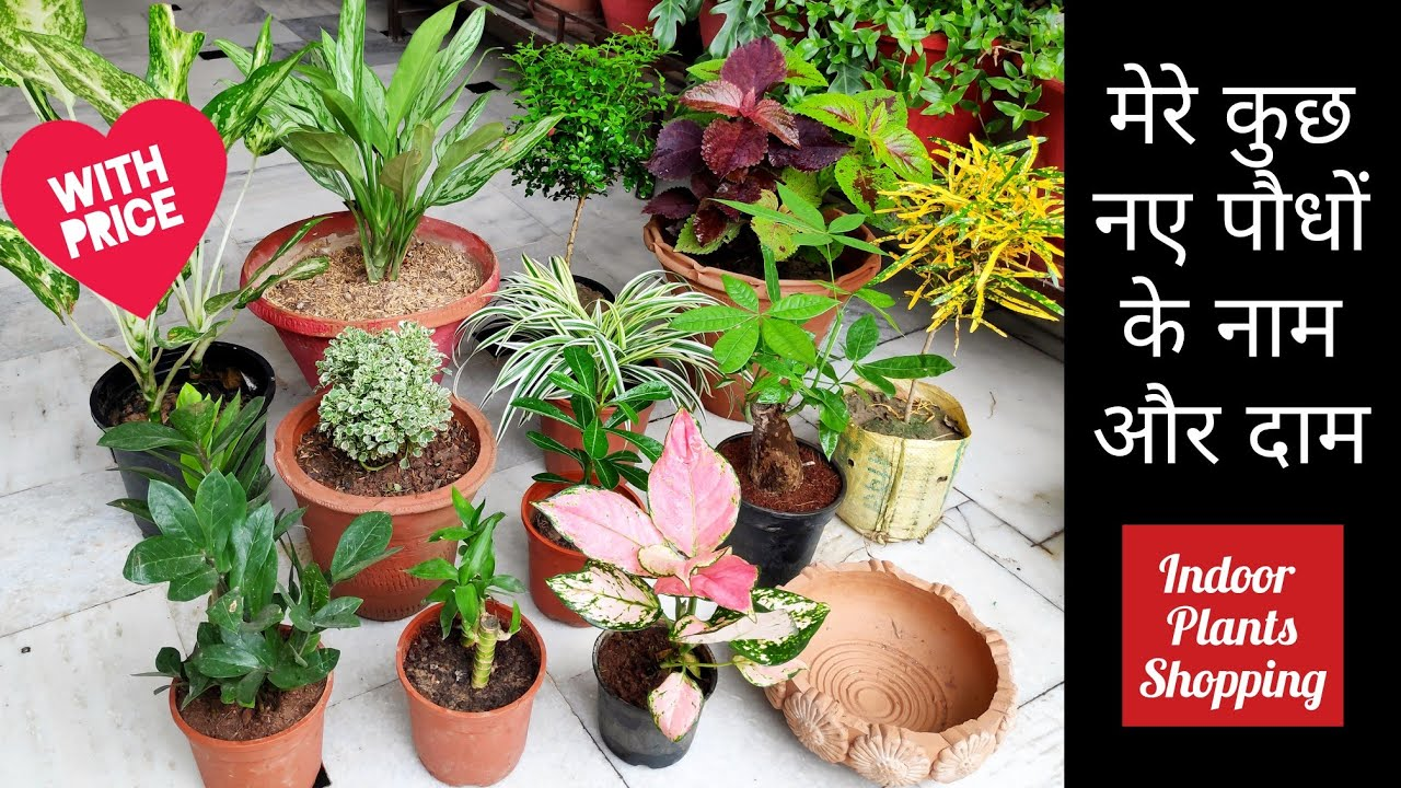Indoor garden plants shopping with names price, मेरे कुछ ...